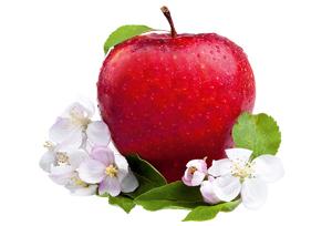 Vitalp Fruchte